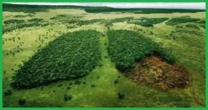 stop pembakaran hutan